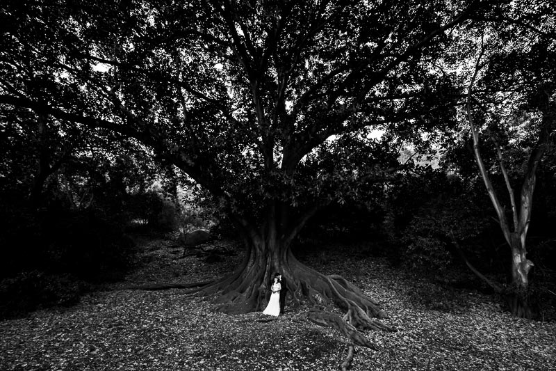 wedding photographer perth matilda bay wedding image of bride and groom kissing under tree