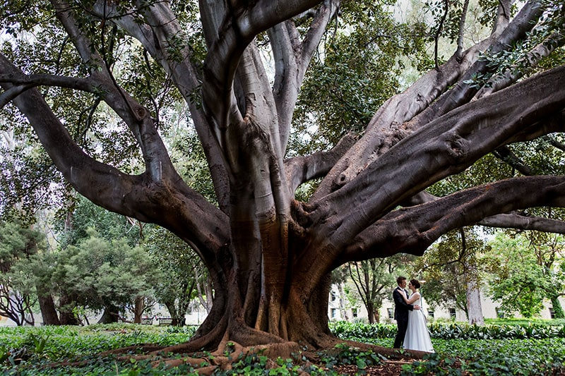 perth wedding planning wedding photo locations perth image of bride and groom under tree