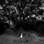 perth wedding planning wedding photo locations perth image of bride and groom at mounts bay road trees